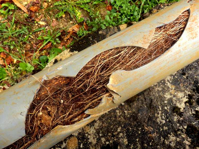 Root Blockage Miami FL 33155 - Eco 1 Plumbing LLC